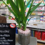 仲村薬局のダイエット:あなたのサポートを受ければ必ずやせますか?